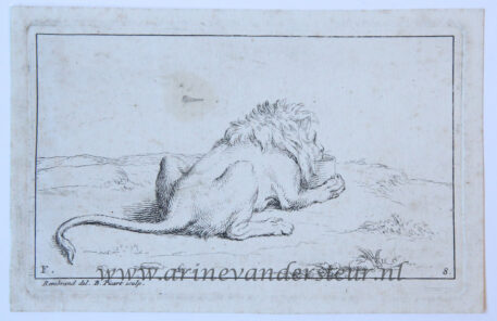 Seven etchings of lions after Rembrandt, of a set of eight, making up part F of the series 'Recueil de lions'/Zeven etsen van leeuwen naar Rembrandt, 1728.