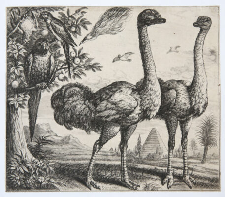 [Original etching] Two Ostriches