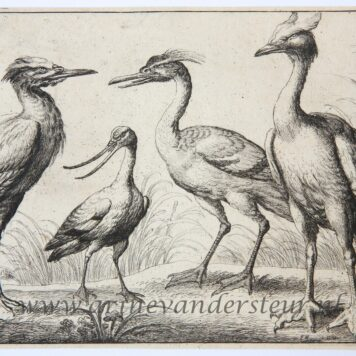 Four wading birds [set: Diversae avium species], ca 1658/ Watervogels.