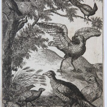 [Original etching and engraving] Various birds (diverse vogels)