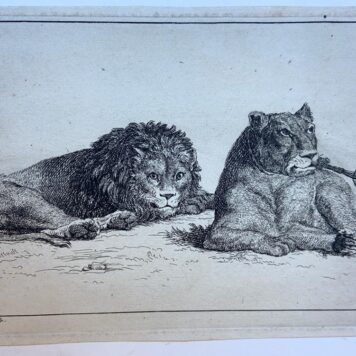 [Original etching 1729] Lion and lioness [set title: Recueil de Lions] / Leeuw en Leeuwin, 1729.