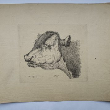 Print. P. Roosing after A. J. Offermans. Head of a cow.