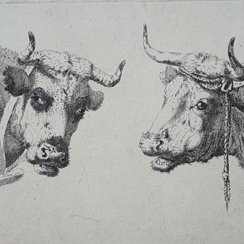 Print. P. Roosing after J. Kobell II. Two cow heads.