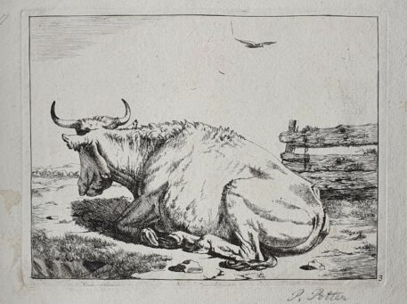 Print. M. de Bye after P. Potter. Laying cow.