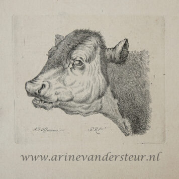 [Original etching, ets] P. Roosing after A. J. Offermans. Head of a cow, published 1800-1850.