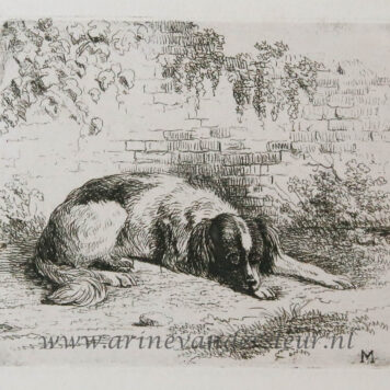 [Antique print, etching] A dog lying on the ground / Hond ligt op de grond.