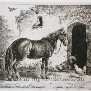 [Antique print, etching] Horse with hen and chicken/Paard met haan en kip.